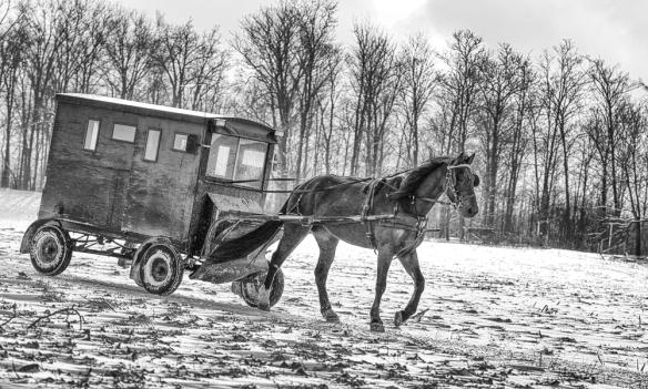 horsebuggy_3273
